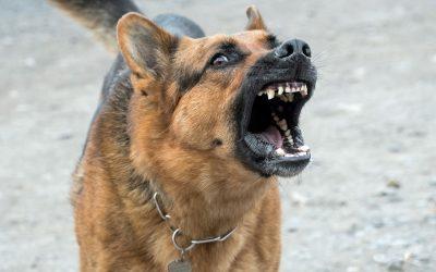 Comment dresser un chien de garde?