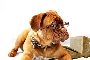 Dresser un chien de garde