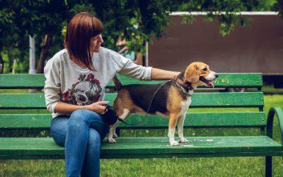 Apprendre à son chien la promenade en laisse : nos conseils