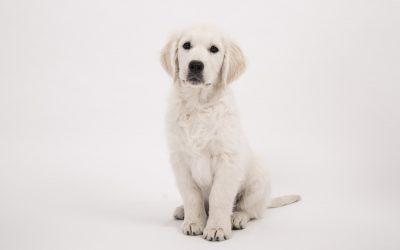 Apprendre son chien: l'ordre «Assis!»