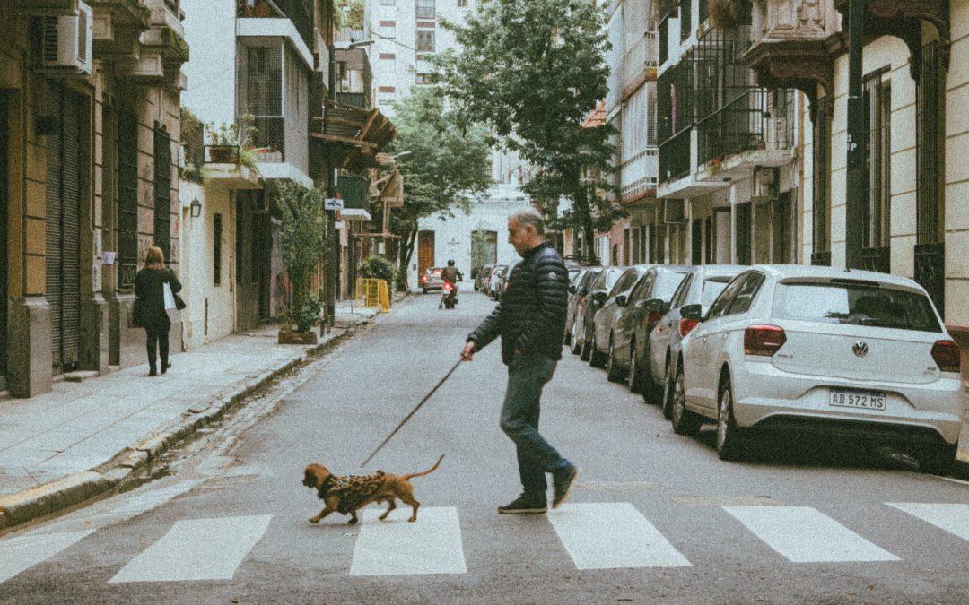 Apprendre à votre chien à traverser la route: nos conseils