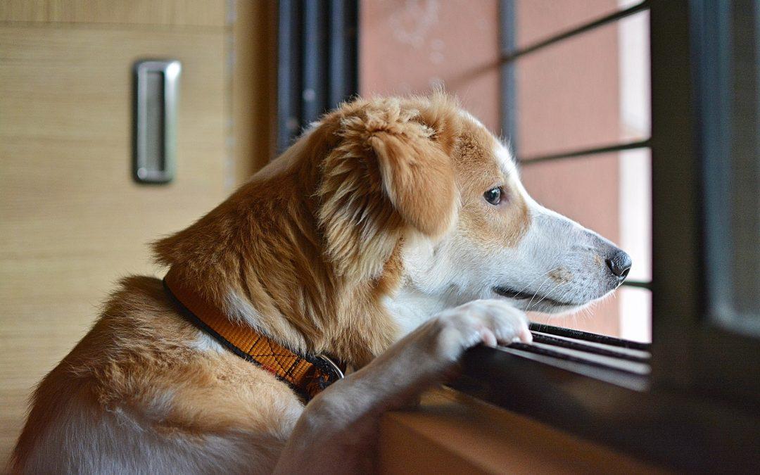 Apprendre à son chien à rester seul : nos conseils