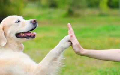 Dressage de chiens : les 5 méthodes qui ont fait leurs preuves