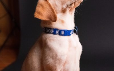 Rééduquer un chien: nos conseils