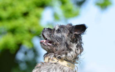 Comment apprendre à votre chien à faire le beau: les étapes à suivre
